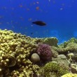 Colorful Fish on Vibrant Coral Reef, Red sea — Stock Video