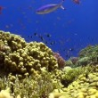Colorful Fish on Vibrant Coral Reef, Red sea — Stock Video #25878193