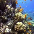 Colorful Fish on Vibrant Coral Reef, Red sea — Stock Video #25888991