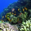 Colorful Fish on Vibrant Coral Reef, Red sea — Stock Video #25897935