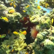 Colorful Fish on Vibrant Coral Reef, Red sea — Vidéo #25926893