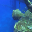 图库视频影像: Shipwreck on Seabed, Red Sea