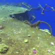 Stock Video: Shipwreck on Seabed, Red Sea