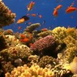 Colorful Fish on Vibrant Coral Reef, Red sea — Stock Video #25978709