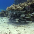Colorful Fish on Vibrant Coral Reef, Red sea — Stockvideo #25980627