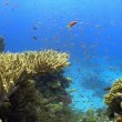 Colorful Fish on Vibrant Coral Reef, Red sea — Vidéo #25988919