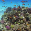 Stock Video: Colorful Fish on Vibrant Coral Reef, Red sea