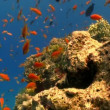 Coral reef red fish — Stock Video #26019365