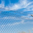 Stock Photo: Mesh fence with barbed wire