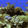 Colorful Fish on Vibrant Coral Reef — Stock Video #31020551