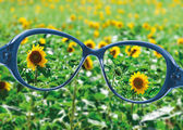 View from reading eyeglasses on beautiful nature view — Stock Photo