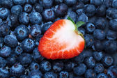 Freshly picked blueberries with strawberry — Stock Photo