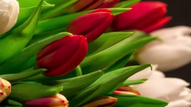 Bouquet of bright tulips blooms, timelapse — Wideo stockowe