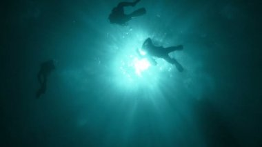 Group of Divers — Stock Video