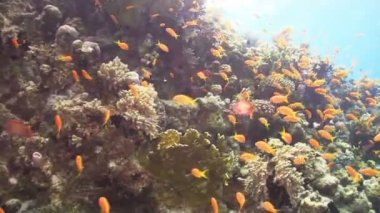 Tropical Fishes — Stock Video