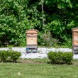 Stock Photo: Row of beehives