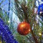 Christmas-tree l — Stock Photo