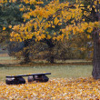 Bench in the autumn landscape — Stock Photo