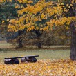 Bench in the autumn landscape - Photo