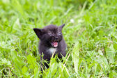 Temper - small kitten in the grass — Stock Photo