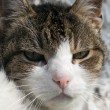 Stock Photo: Sullen cat