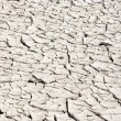 Dry season - dried ground - Stock Photo