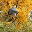 Lamp in the autumn leaves — Stock Photo
