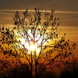 Autumn tree in the sunset — Stock Photo