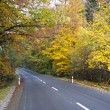 Stock Photo: Road in autumn forest