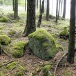 Moss-covered boulder — Stock Photo