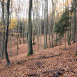 Beech wood — Stock Photo #34095621
