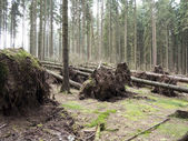 Fallen trees — Stock Photo