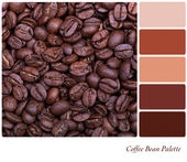 Coffee bean palette — Stock Photo
