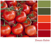 Tomato palette — Stock Photo