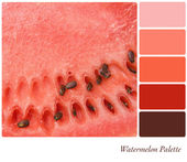 Watermelon Palette — Stock Photo