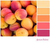 Apricot palette — Stock Photo