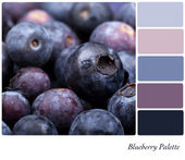 Blueberry Palette — Stock Photo