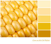 Corn on the cob palette — Stock Photo
