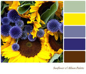 Sunflower & Allium Palette — Stock Photo
