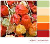 Chinese Lantern palette — Stock Photo