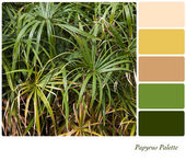 Papyrus palette — Stock Photo