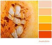 Colour palette template — Stock Photo