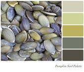 Pumpkin seed palette — Stock Photo