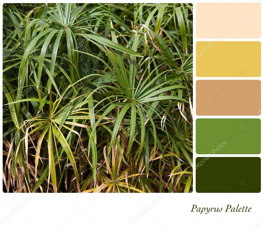papyrus palet stockfoto rixipix 14288607. Black Bedroom Furniture Sets. Home Design Ideas