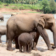 Mother elephant and baby — Stock Photo