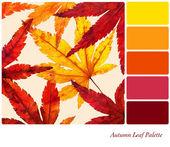 Autumn leaf palette — Stock Photo