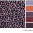Mustard seed palette — Stock Photo