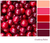Cranberry Palette — Stock Photo