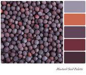 Mustard seed palette — Stock Photo