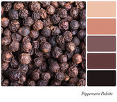 Peppercorn palette — Stock Photo